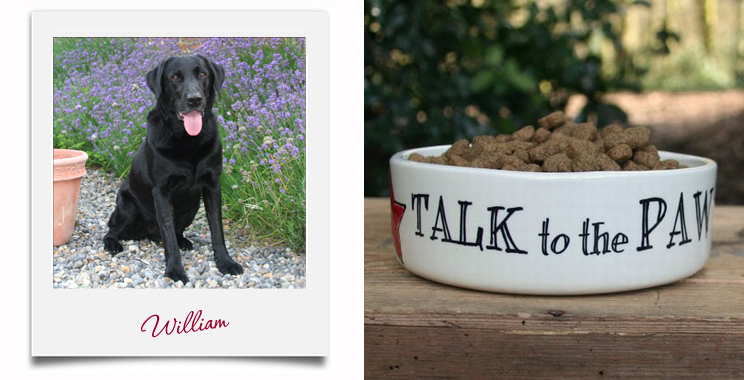 Sweet William Talk to the paw pet bowl