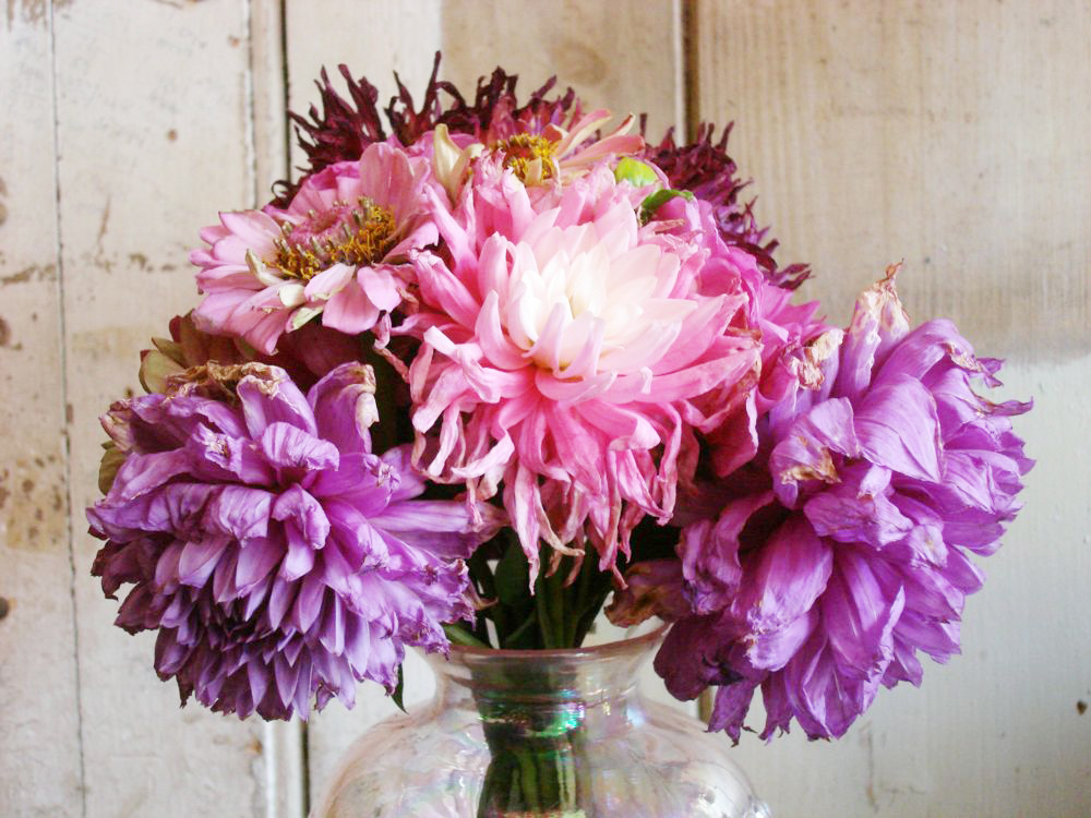 Shabby chic fading blooms