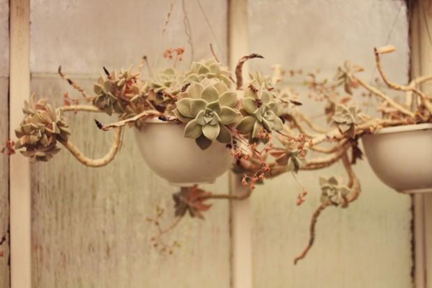 Greenhouse series Megan Boltz