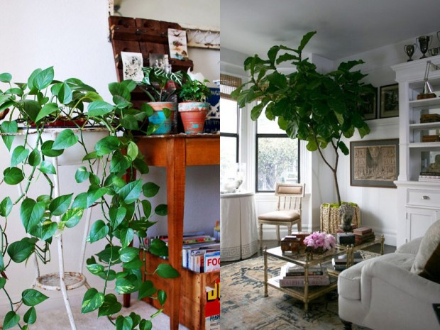 How to redecorate your bedroom on a budget lobster and swan - Indoor plant for bedroom ...