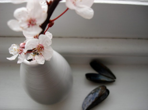 Blossom and shells