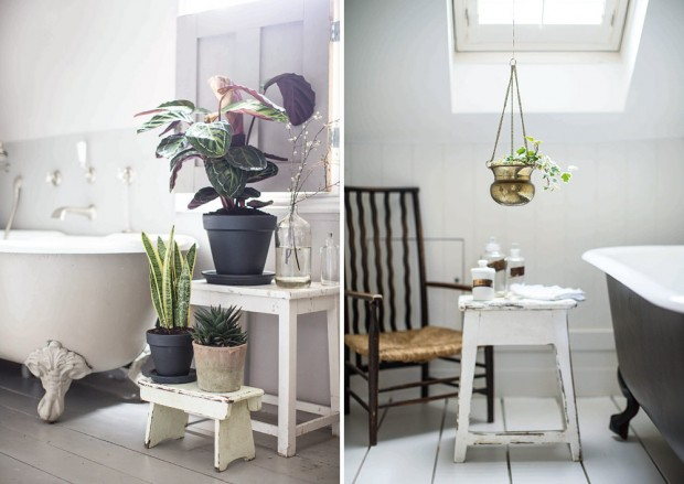 Bathroom Plants - The House Gardener