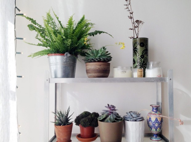 Plants for a bedroom
