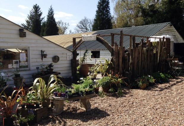 Plant Nursery in Etchingham