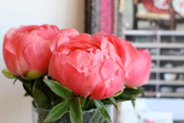 Coral Sunset Peonies