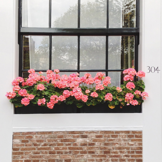 Floral decor -Window boxes in Amsterdam