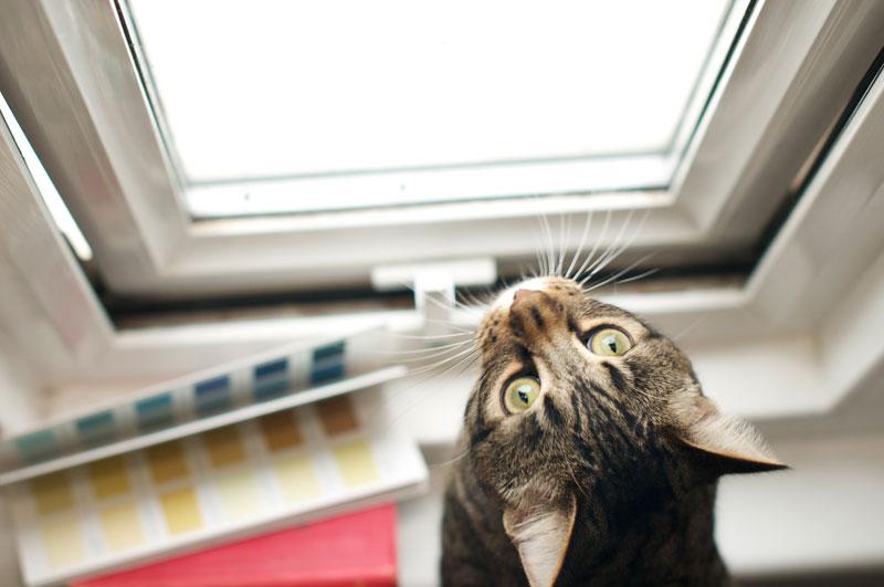 Indoor tabby cat