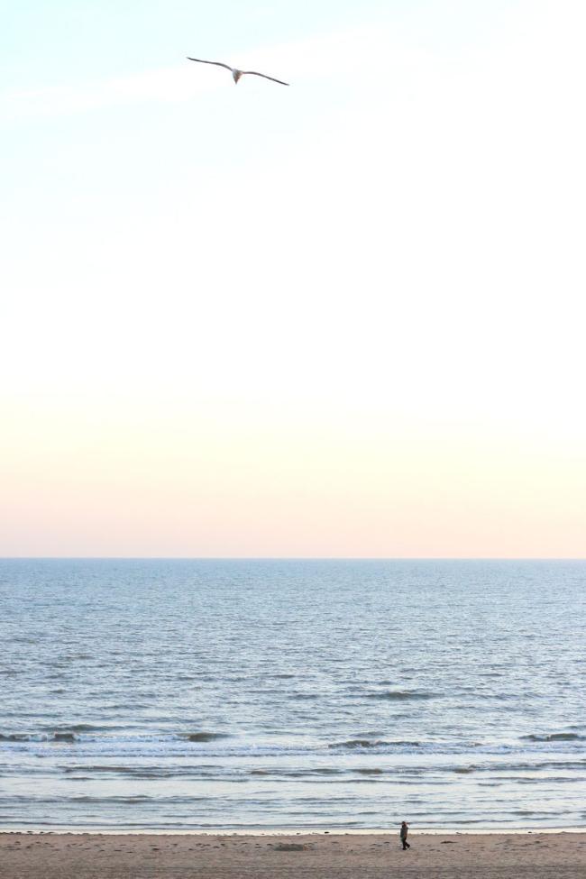 East Sussex coastline