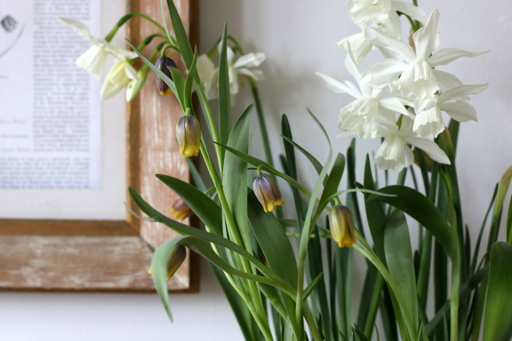 Spring Plants in the home