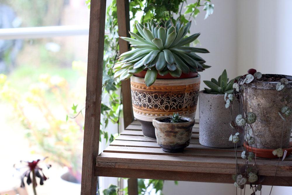 vintage plant pots