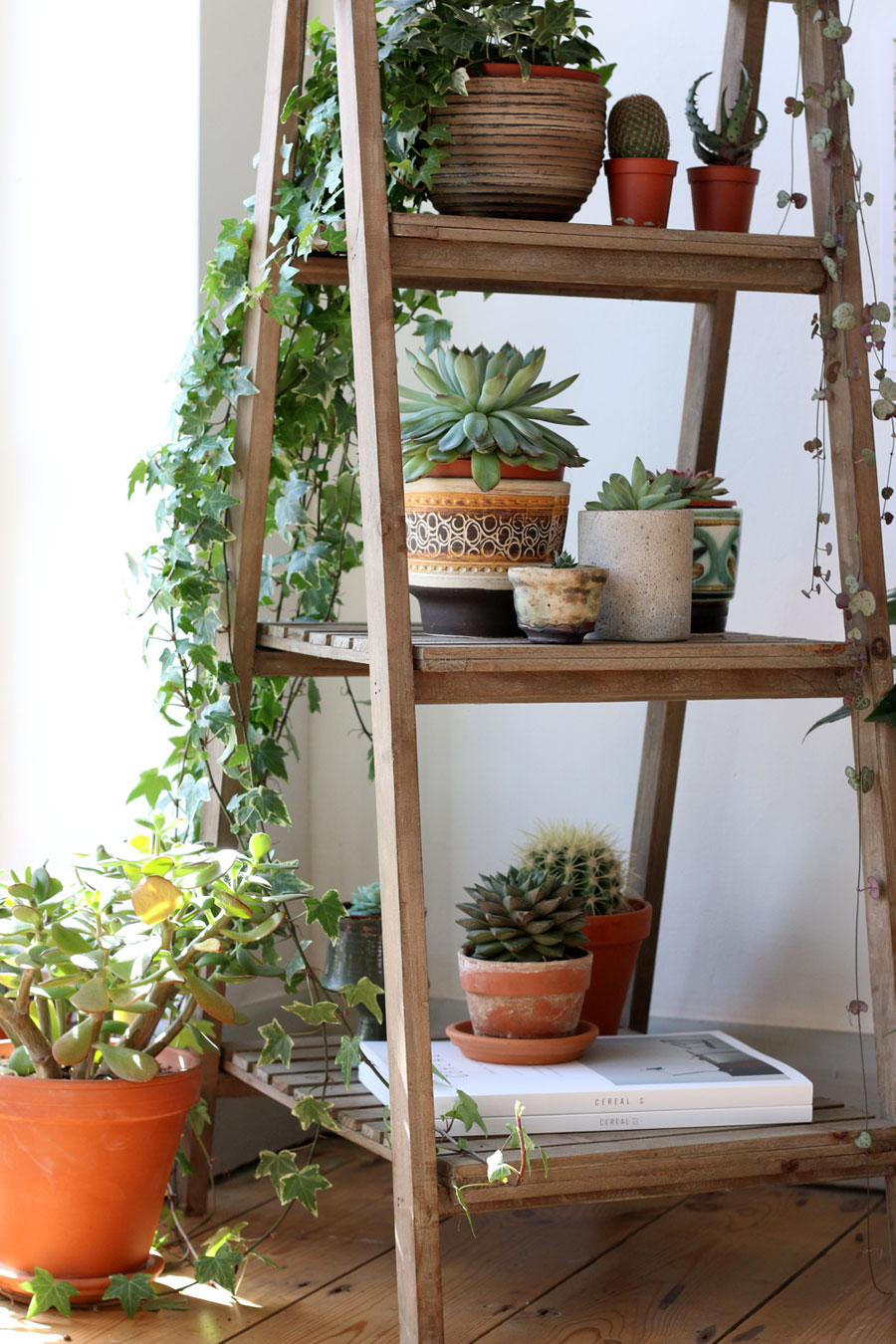 Ladder for plants
