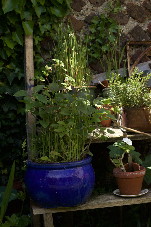 Artist's garden Brighton