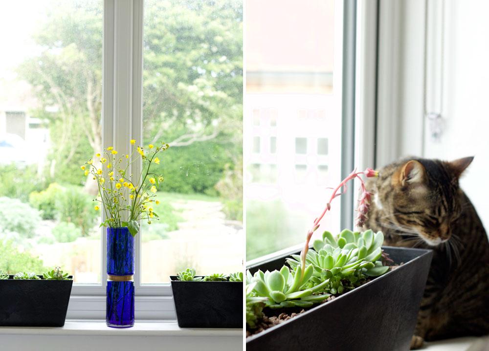 indoor Succulent planters
