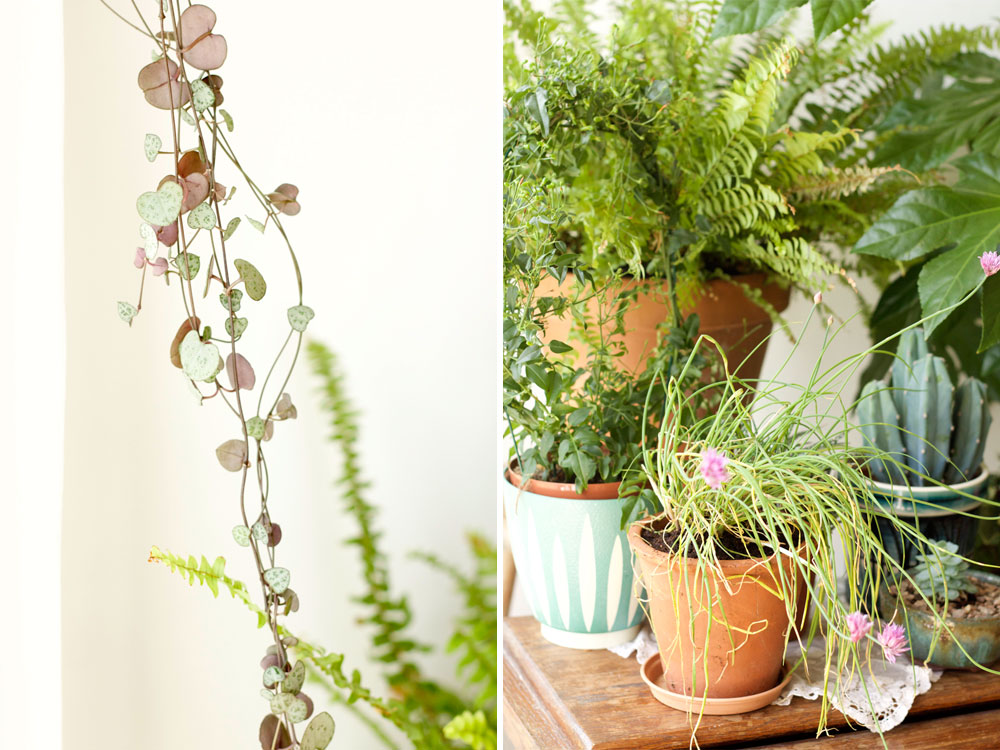 Styling with indoor plants
