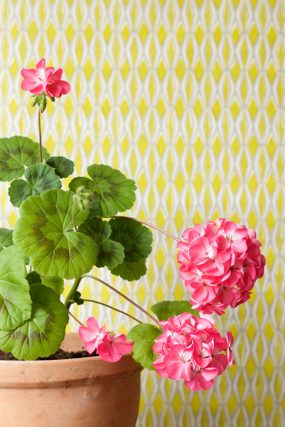 colourful plant styling ideas