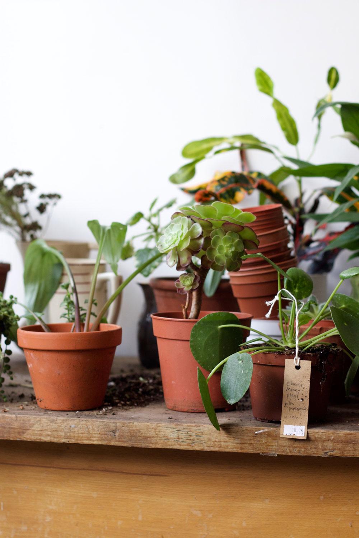 Botany shop London