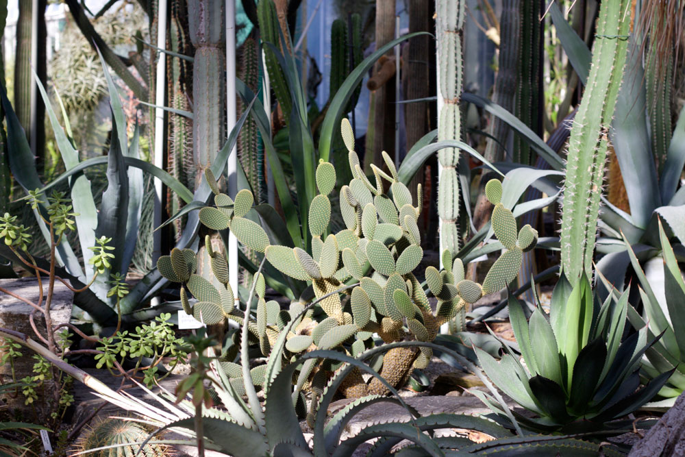 Botanischer Garten Munich Nymphenburg