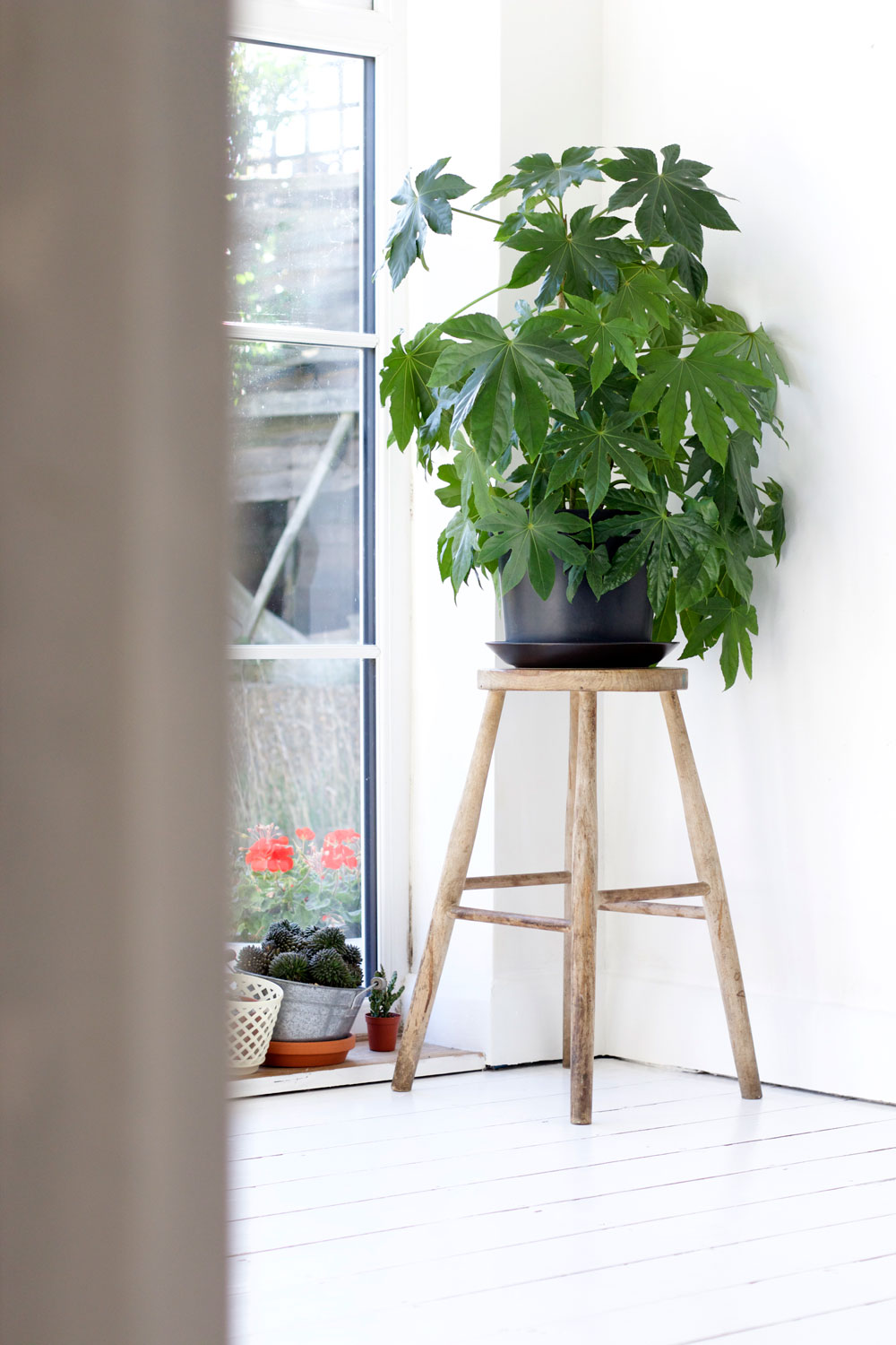 plants in the living space