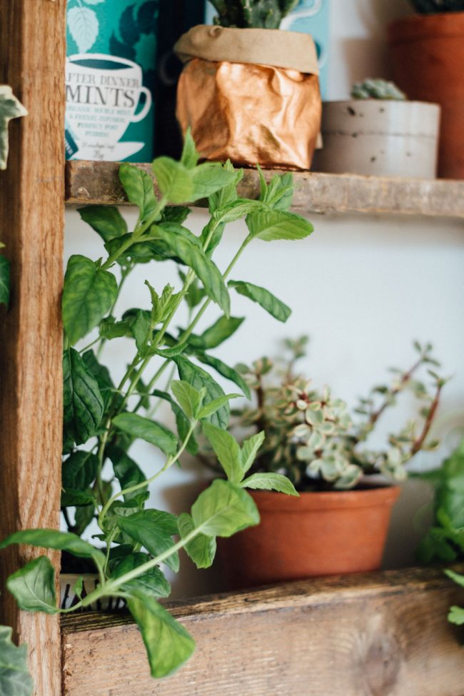 Growing Kitchen herbs