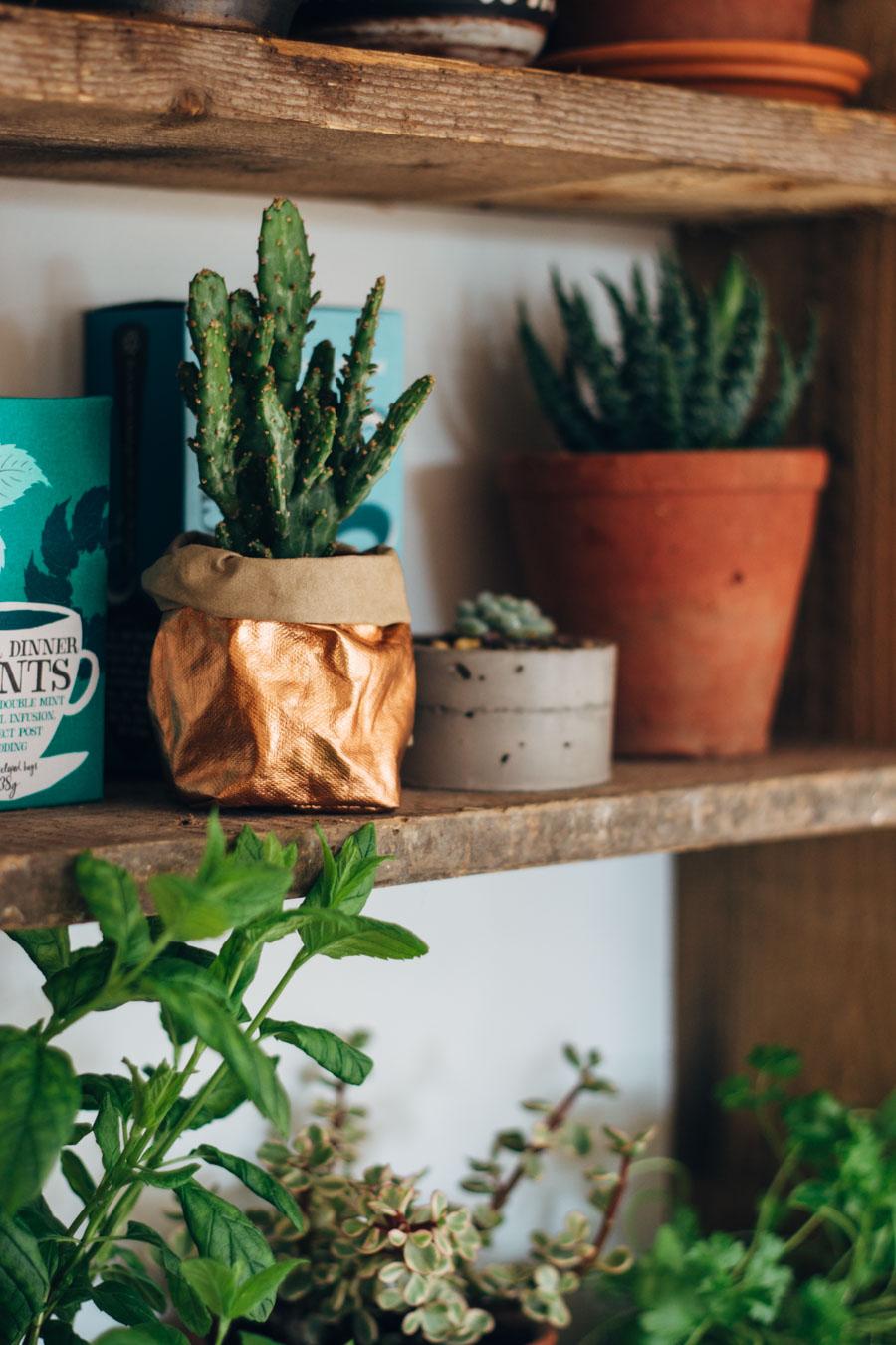 Growing Kitchen Cacti
