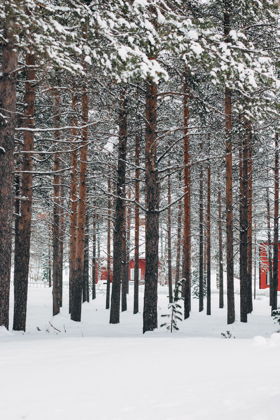 Jokkmokk forest Swedish Lapland
