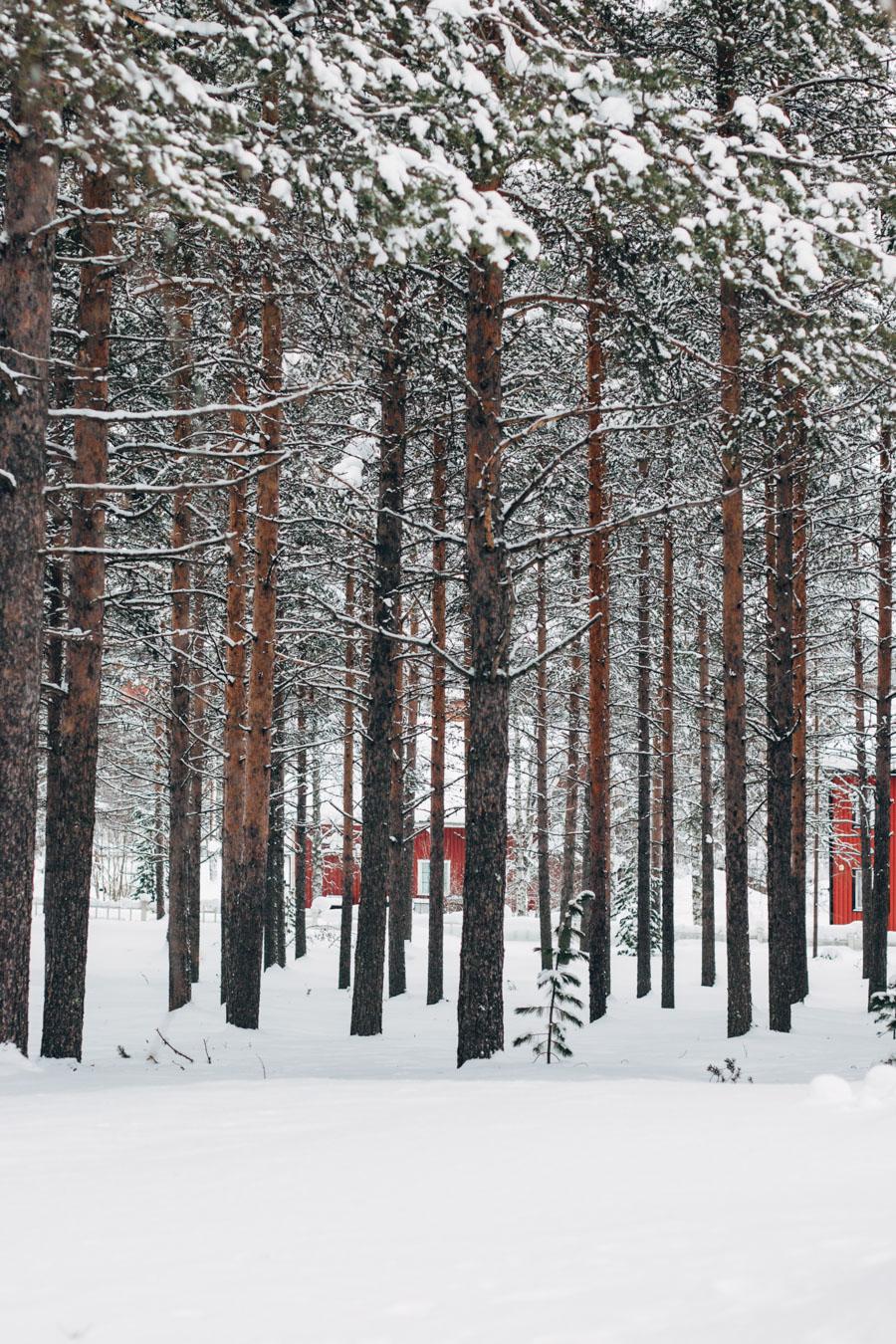 Jokkmokk forest Swedish Lapland