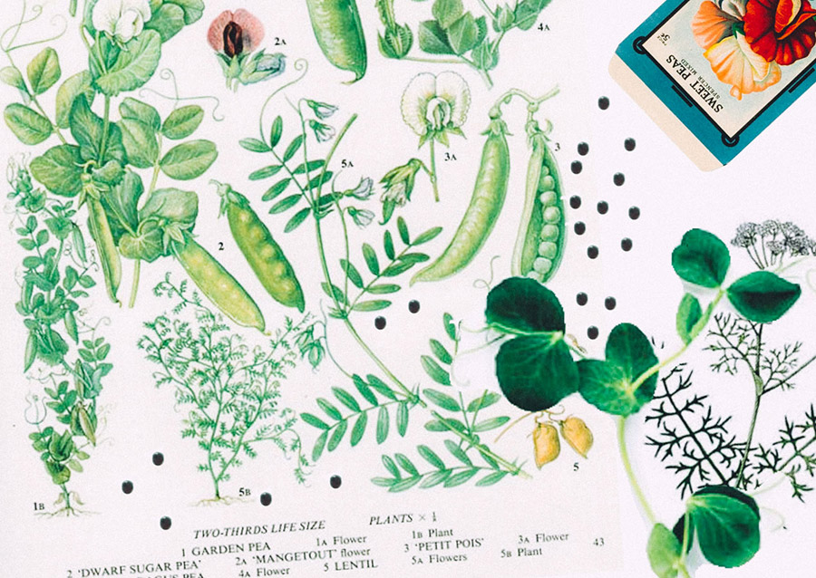 HP Sprout collaged garden journal growing seeds