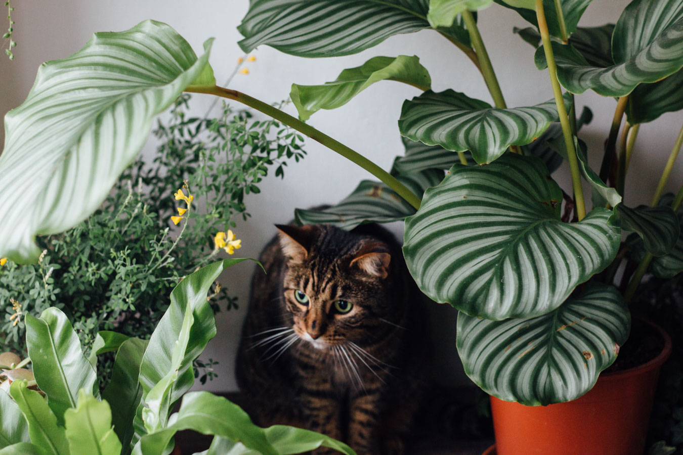 Indoor jungle animals