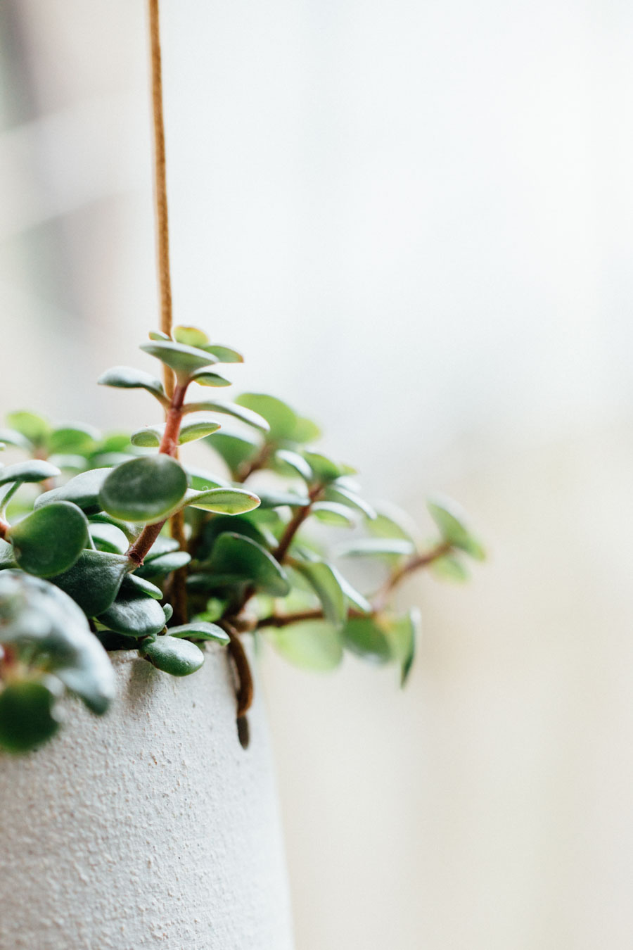 ceramic Plant hanger
