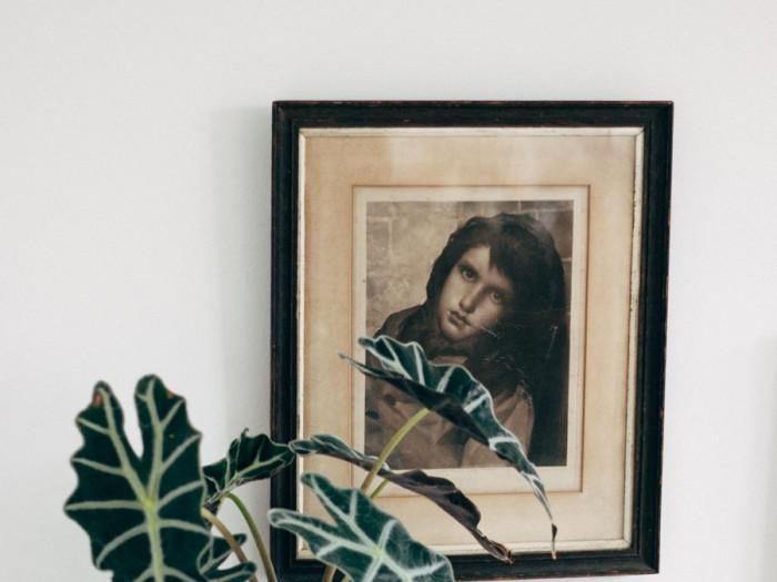 Bedside plants