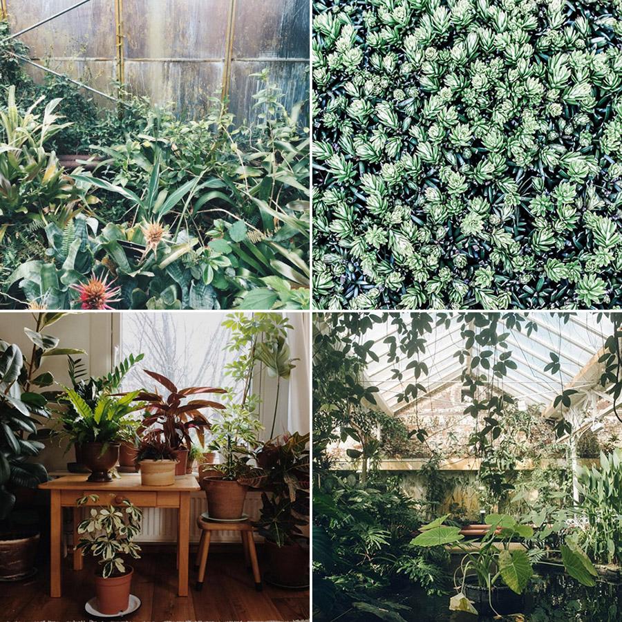 Instagram faves #botanicalpickmeup