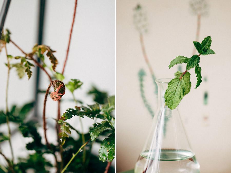 macro plant images
