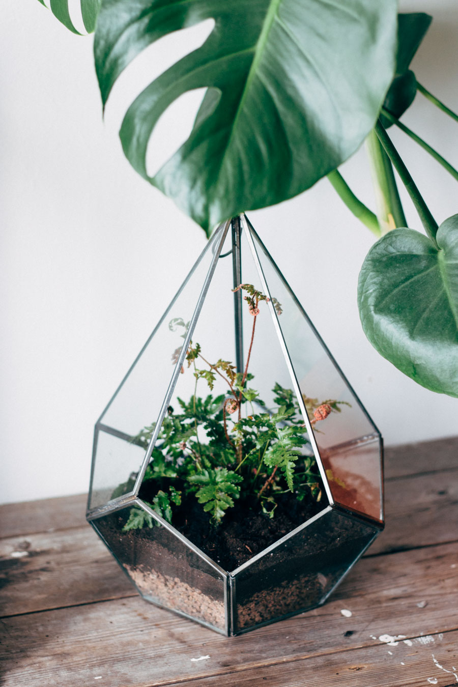 URBAN JUNGLE BLOGGERS MARCH – PLANTS & GLASS - Lobster and Swan