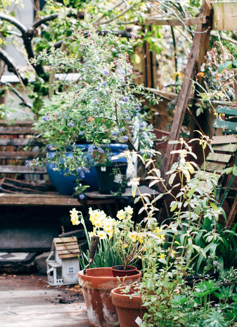 The prettiest urban garden