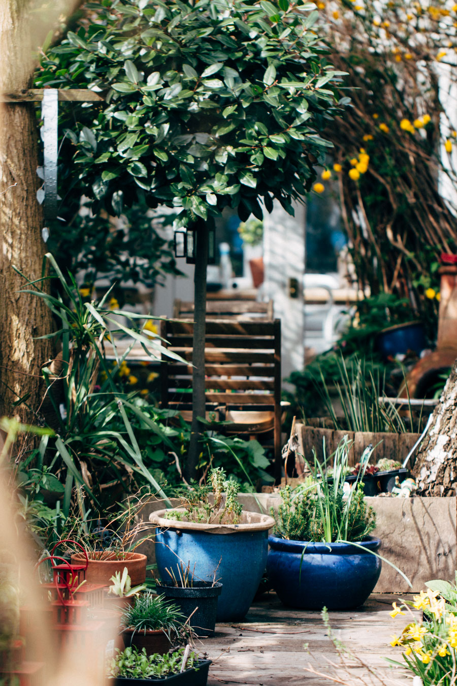 The prettiest urban garden