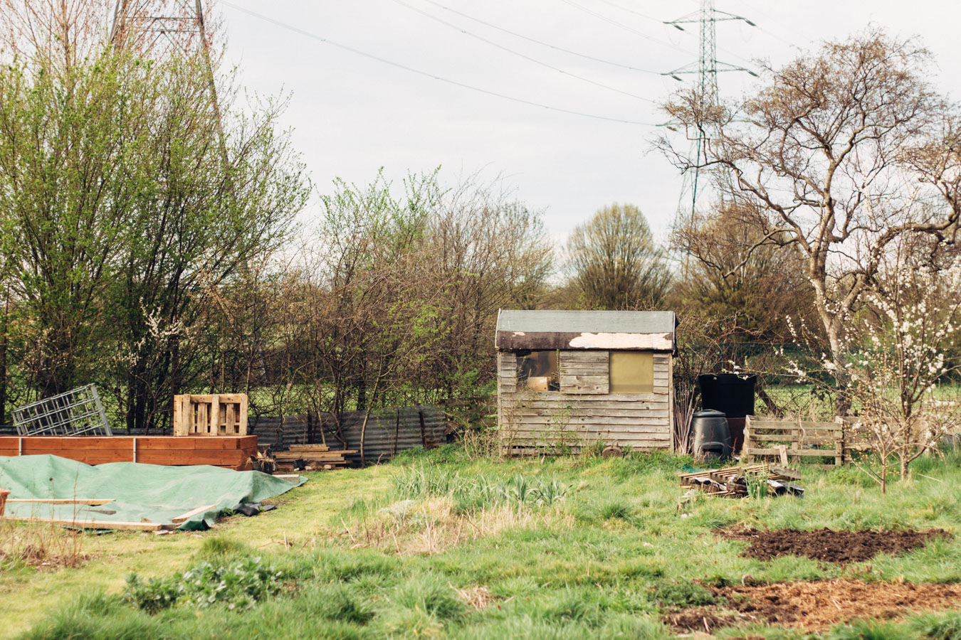 Wanstead Allotments