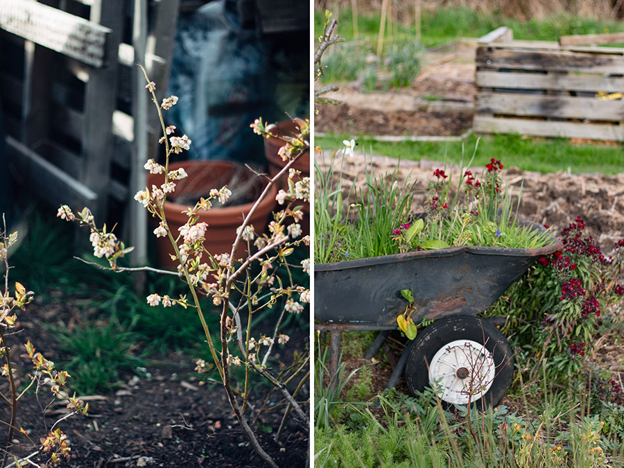 Wheel barrow Planter
