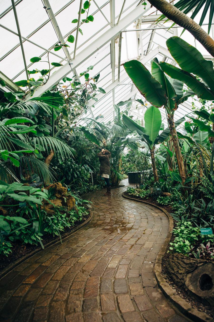 Inside the hothouse Wales Botanic garden
