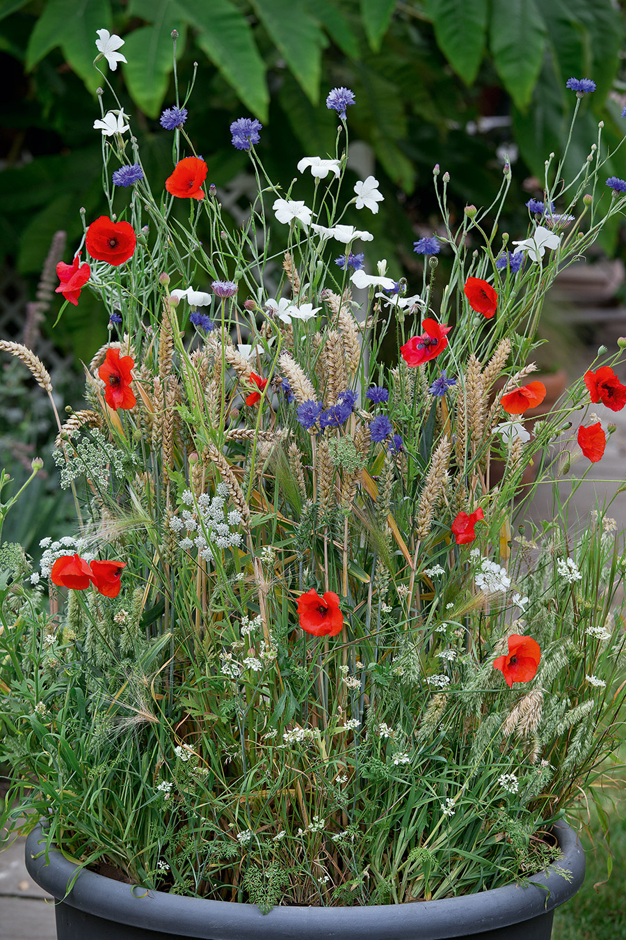 Create a meadow in a bucket!