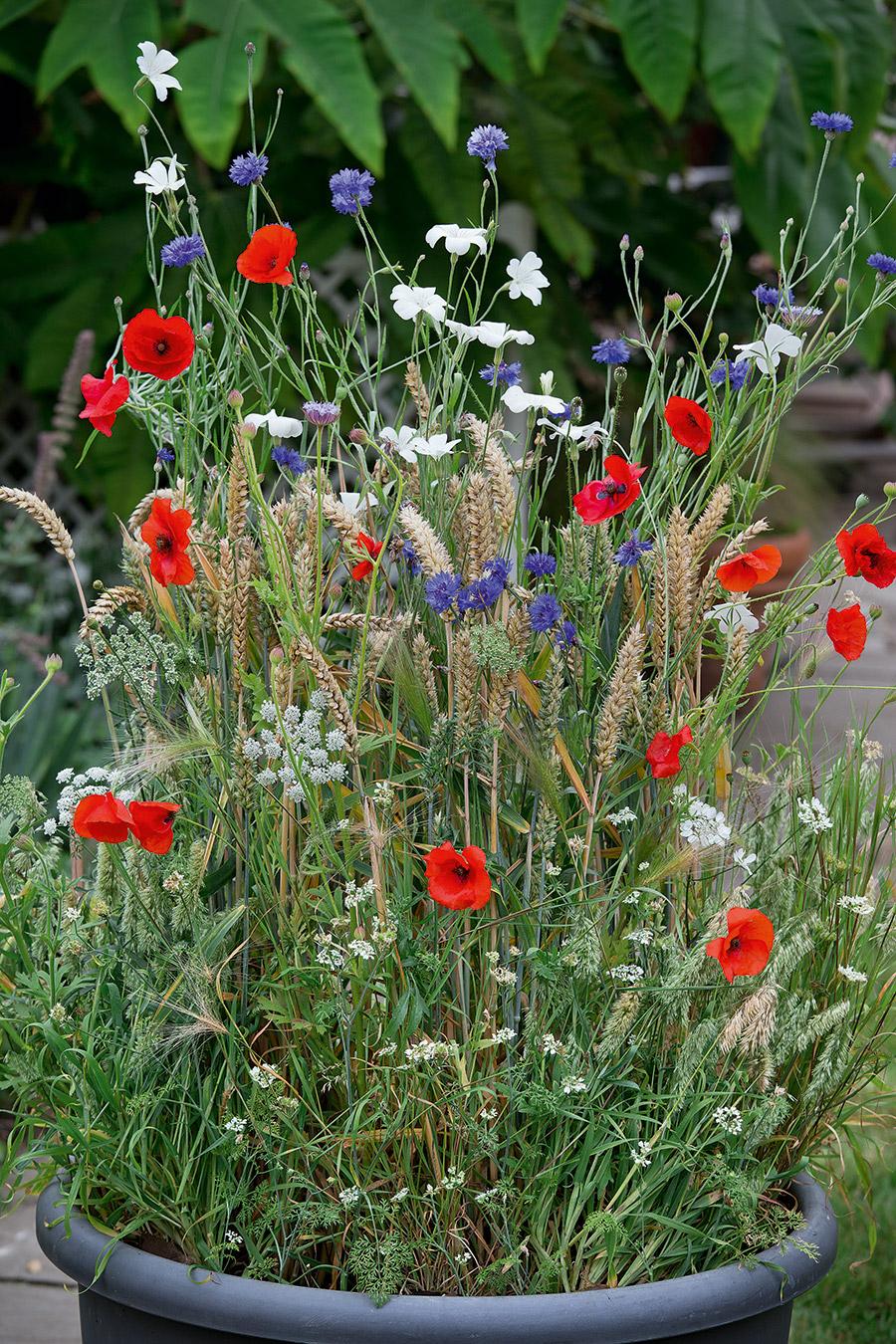 Create a meadow in a bucket!