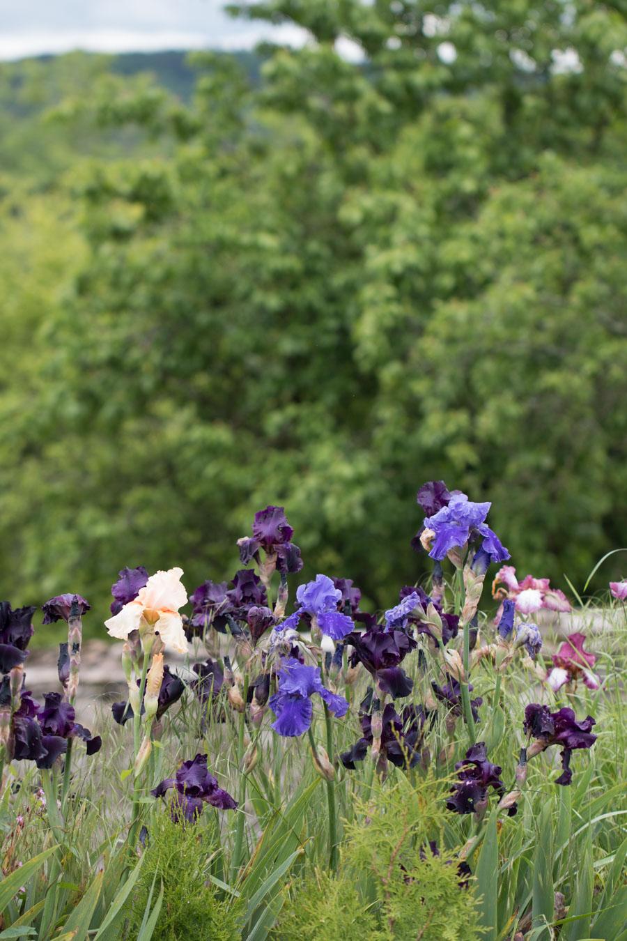 Iris garden terrace