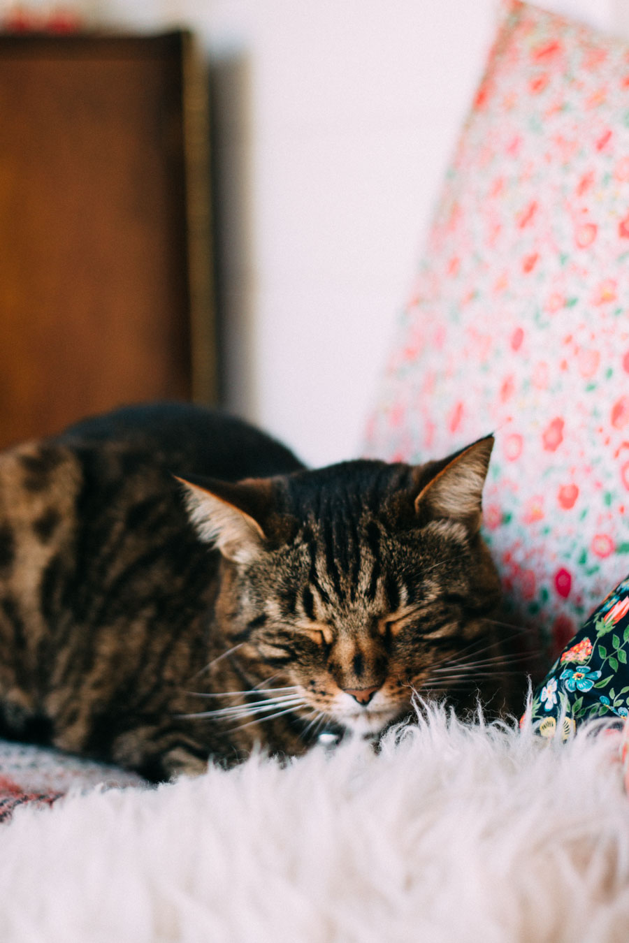 Tabb cat