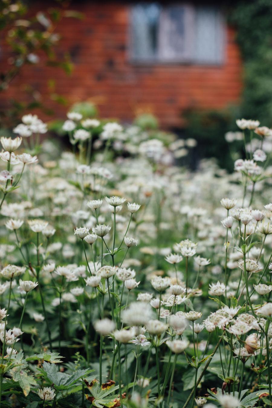 Sissinghurst Garden Kent White