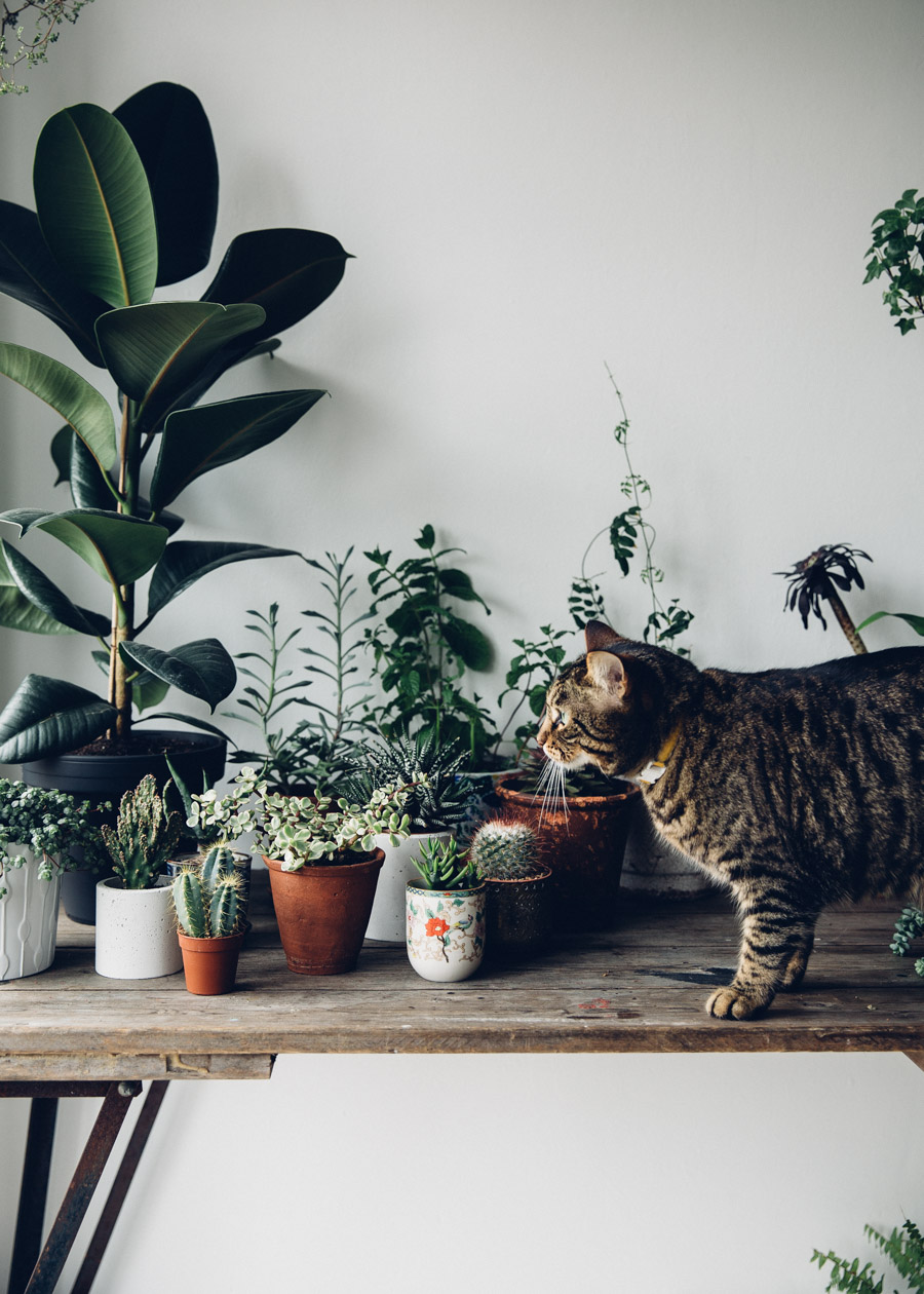 Plants in the home