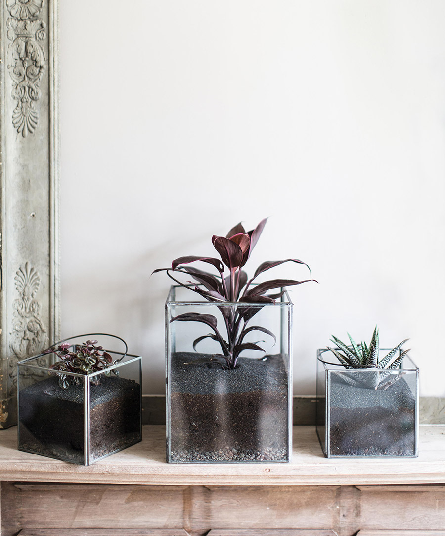 House Plants by Isabelle Palmer