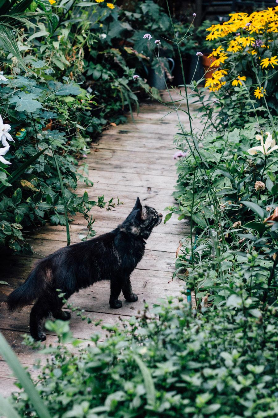 Urban garden cat