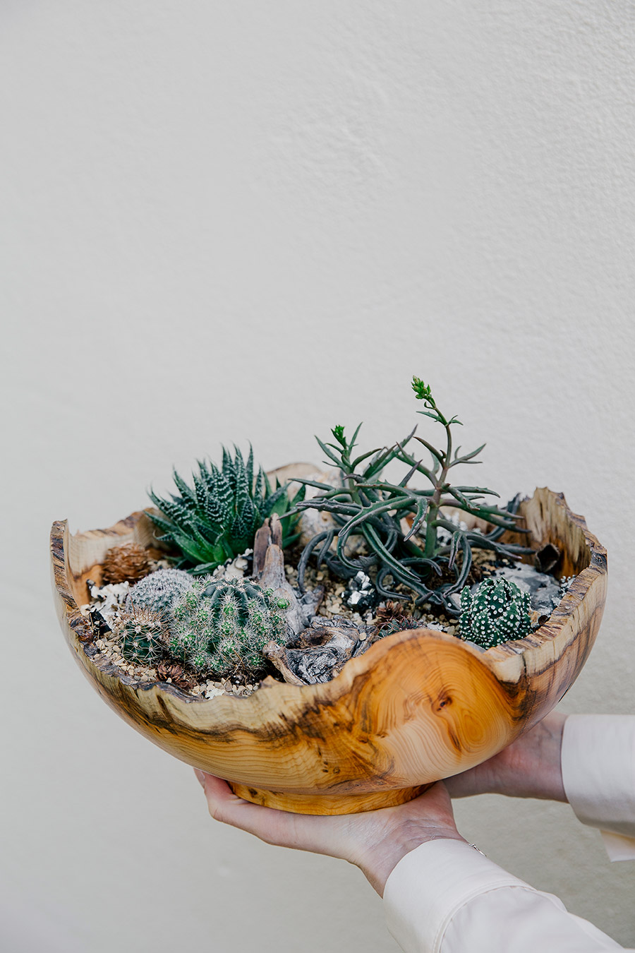 House of plants - Stunning succulent bowl