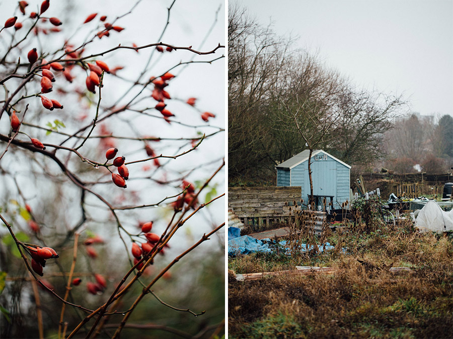 winter on the allotment