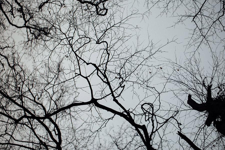tree scenes