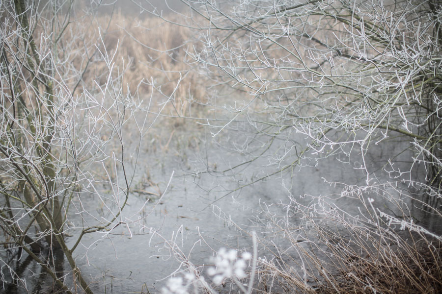 Frozen hedgerows